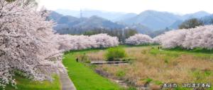本庄市 こだま千本桜